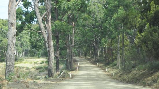 Mt. Mangana Forest